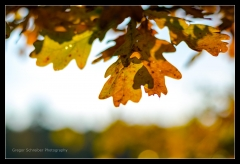 Herbst 2016 (16)