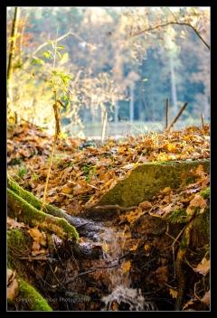 Herbst 2016 (13)