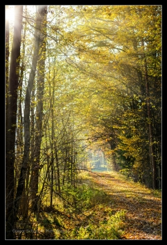 Herbst 2016 (11)
