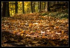 Herbst 2016 (2)