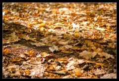 Herbst 2016 (3)
