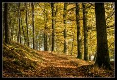 Herbst 2016 (4)