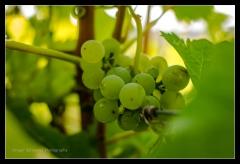 Weingut Braun Volkach