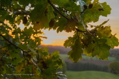 Herbst06