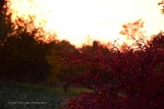 Herbst07