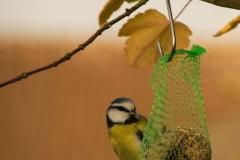 Vögel01