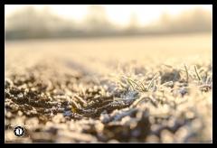 Winter Wonderland - Winterzauber